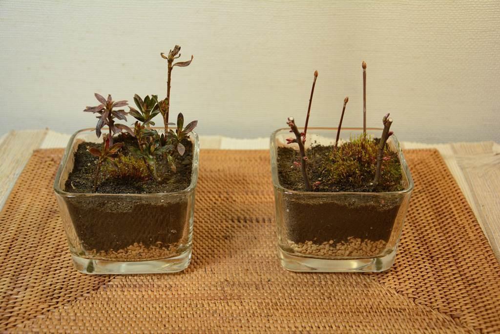 盆栽をより綺麗に魅せるアイテムのアタ製品マット
