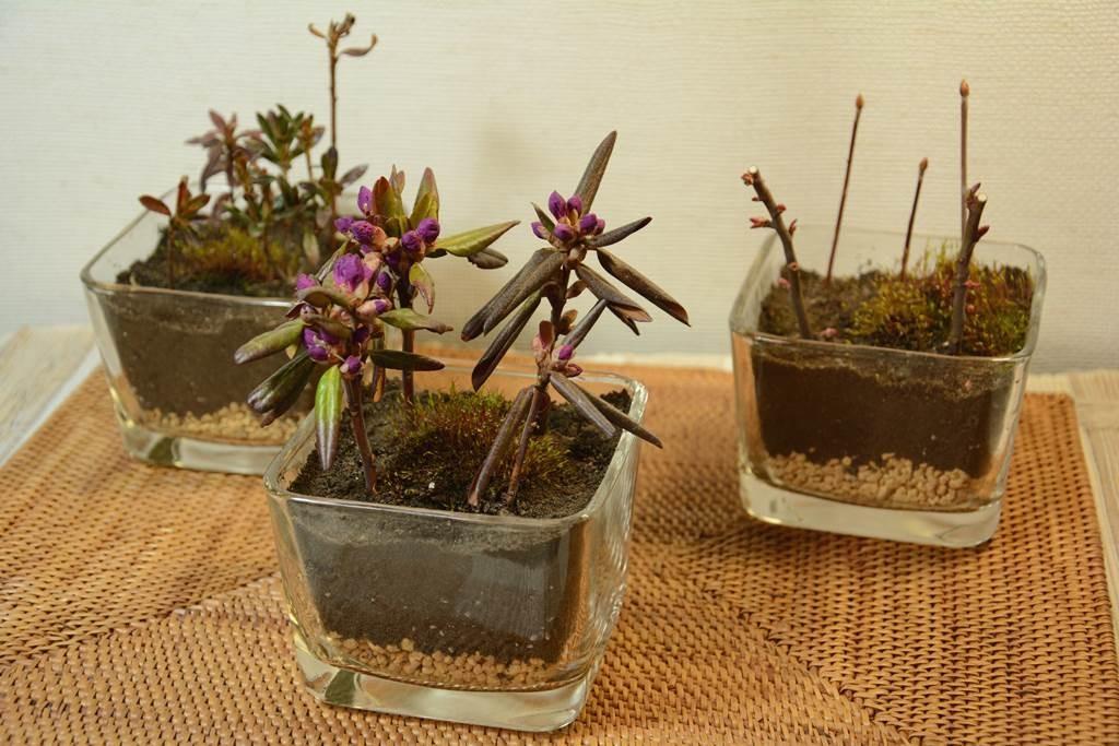 天然素材のマットで盆栽をより綺麗に魅せる