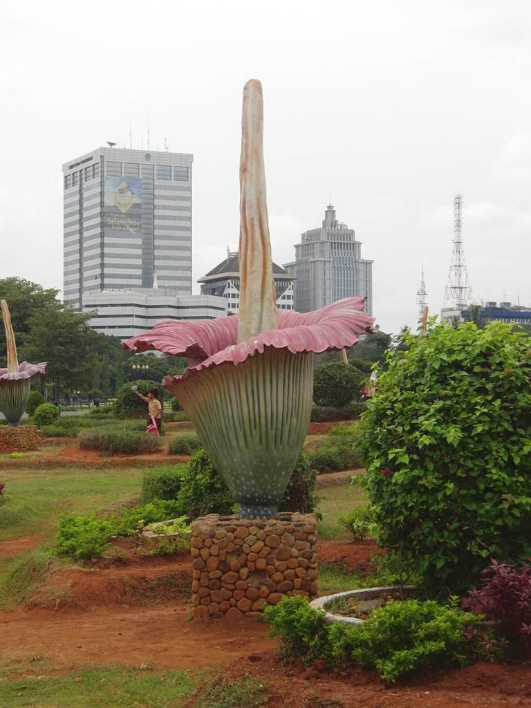 インドネシアの珍しい植物
