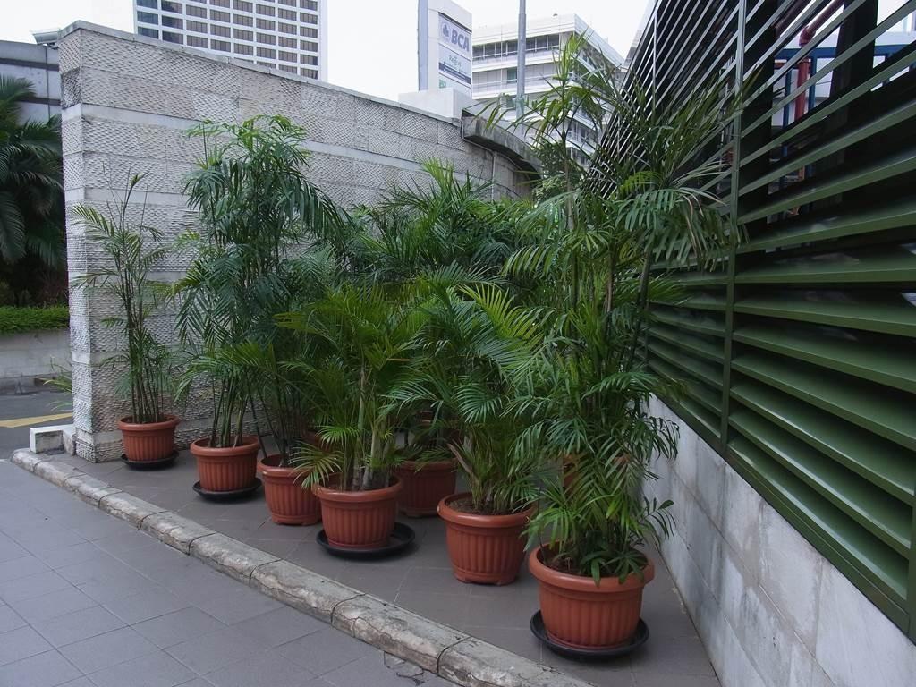 ジャカルタの外にあった観葉植物