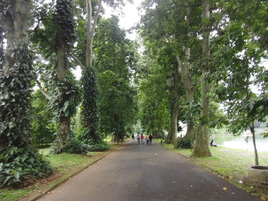 ボゴール植物園内の道の様子