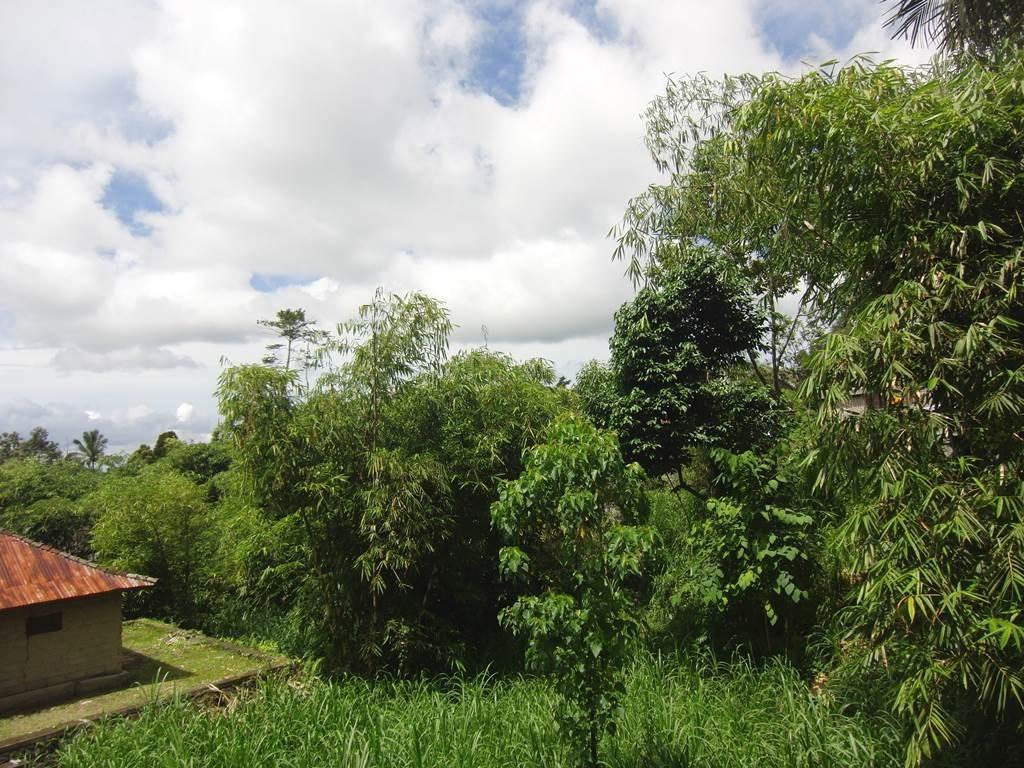 植物が茂っているブサキ寺院の光景