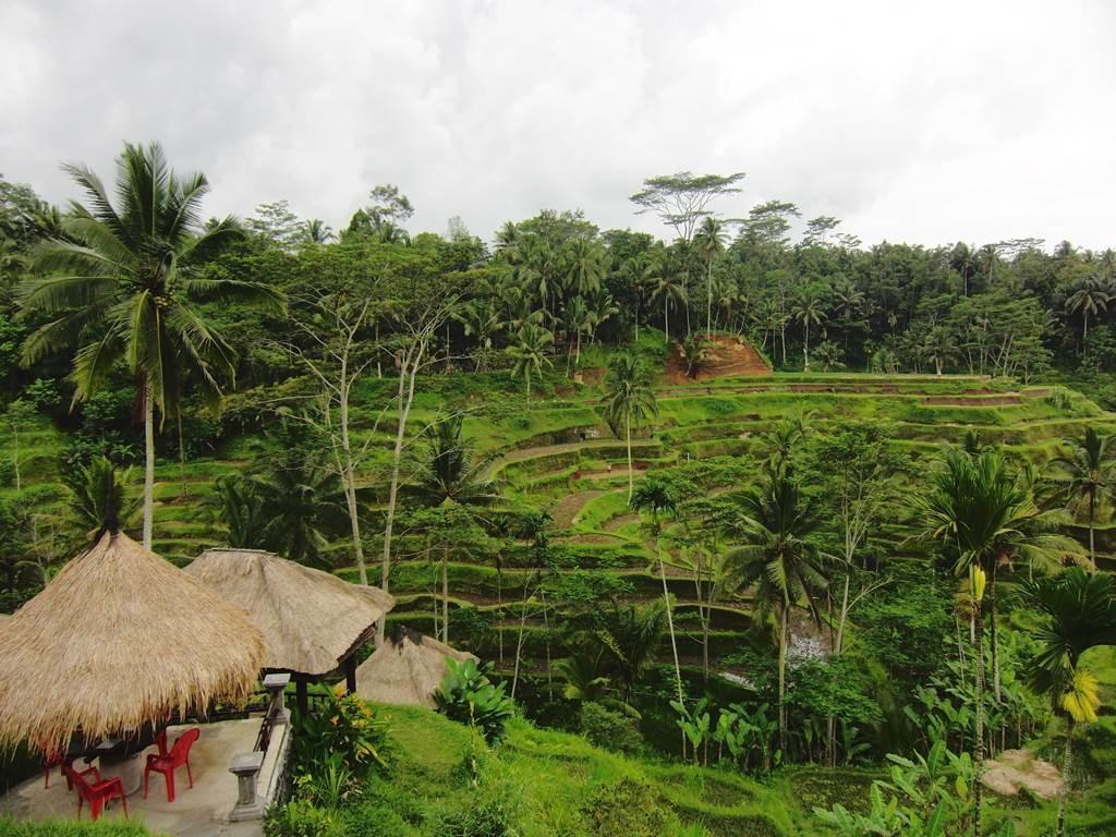 ウブドのテガララン(tegalalang)ライステラス9