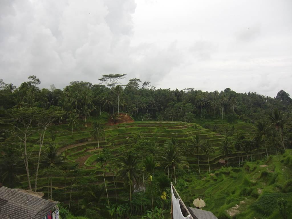 ウブドのテガララン(tegalalang)ライステラス12