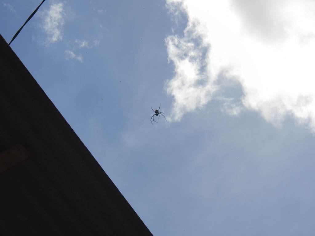labah-labah(蜘蛛)をバリ島で見た