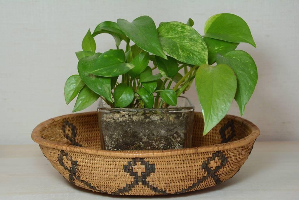 アタのバスケットと観葉植物