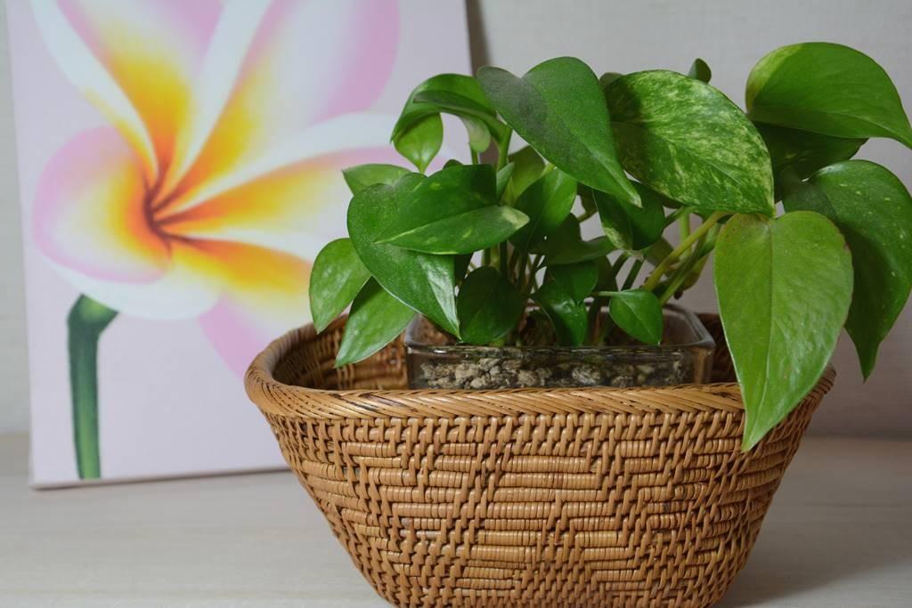 観葉植物を綺麗に見せる